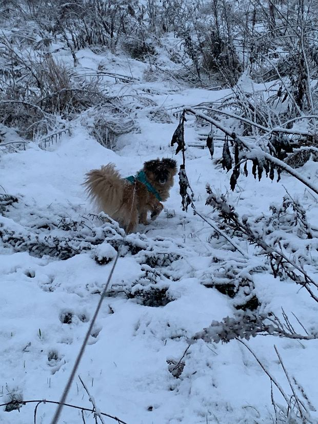Chutes de neige (5 janvier)