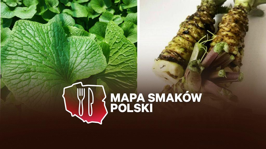 Wasabi Farm Poland mieszcząca się pod Radomiem to jedyna w Europie Środkowej farma wasabi.