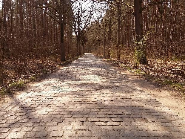 Trasy rowerowe biegną często wśród lasów