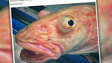 Ten rybak łowi w głębinach prawdziwe potwory. To nie są ładne zwierzątka