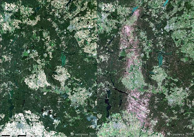 Bory Tucholskie - porównanie stanu sprzed i po nawałnicy, która miała miejsce w sierpniu 2017 r.