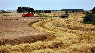 02.08.2010 Wilcze, kombajn rolniczy podczas zbioru zbóż i roślin okopowych