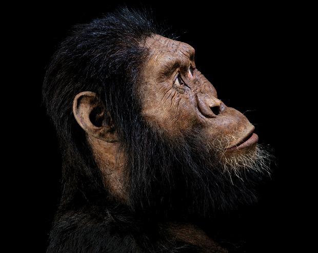 Australopitek anamensis - przodek Lucy?