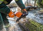 MO dla drzew. Przypilnują, żeby za szybko nie znikały z Bydgoszczy