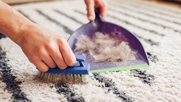 Jak usunąć włosy i sierść z dywanu lub tapicerki?