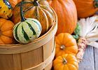 Kosztowna tradycja. Ile ton dyni marnujemy w Halloween?