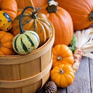 Po Halloween dynie jadalne można wykorzystać w kuchni do pysznych dań. Zaś pastewne i ozdobne wyrzucić na kompost lub do bio-odpadów.