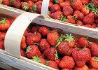 Pierwsze polskie truskawki już w sprzedaży. Owoców w tym roku będzie mnóstwo i będą tańsze