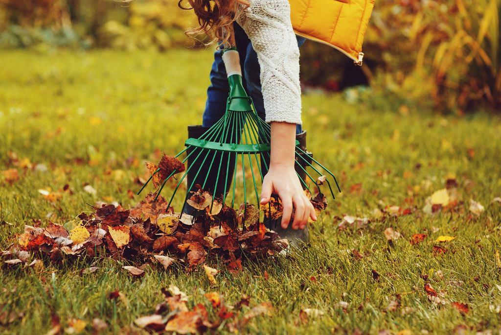 trawnik jesienia