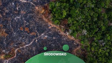 Amazoński las