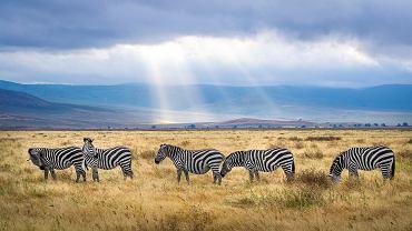 parki narodowe w Afryce (zdjęcie ilustracyjne)