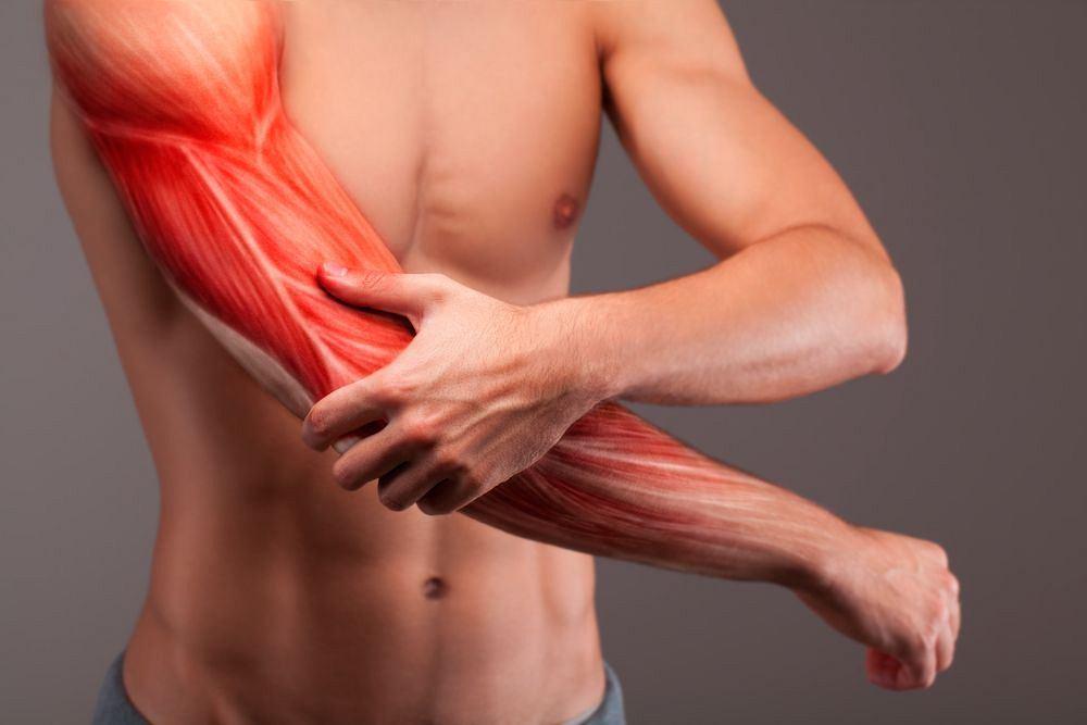 Umożliwiają nam poruszanie i wykonywanie precyzyjnych czynności. Pozwalają krążyć krwi, są niezbędne przy podstawowych czynnościach życiowych, jak oddychanie. Mięśnie