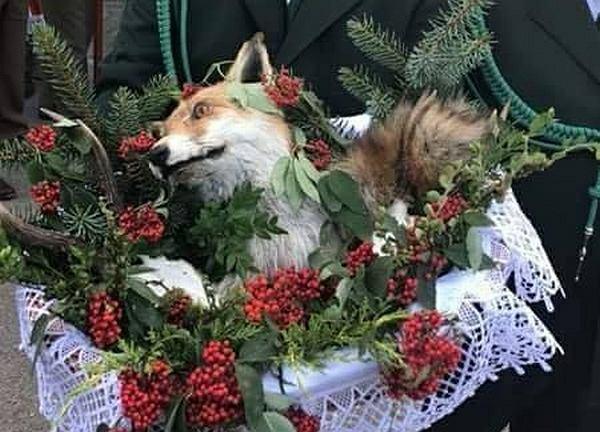 Martwy lis w koszyku na pielgrzymce myśliwych