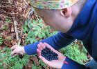 Kupujesz albo zbierasz owoce leśne? GIS ostrzega: Uważaj na bąblowicę