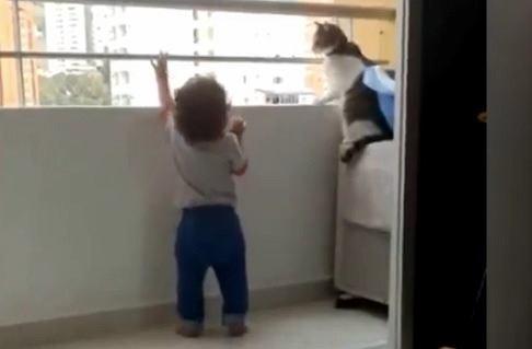 Kot uniemożliwa wejście dziecku na balustradę