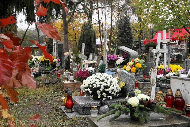 Zdjęcie numer 5 w galerii - Wszystkich Świętych we Wrocławiu. Cmentarze w kwiatach [ZDJĘCIA]