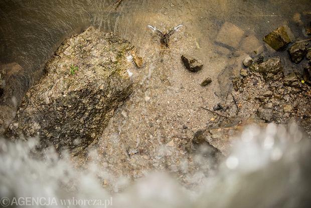 Zdjęcie numer 6 w galerii - Woda znów płynie po skałach Kadzielni, uruchomiono wodospad [ZDJĘCIA]