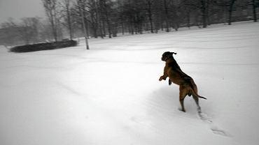 Pies [zdjęcie ilustracyjne]