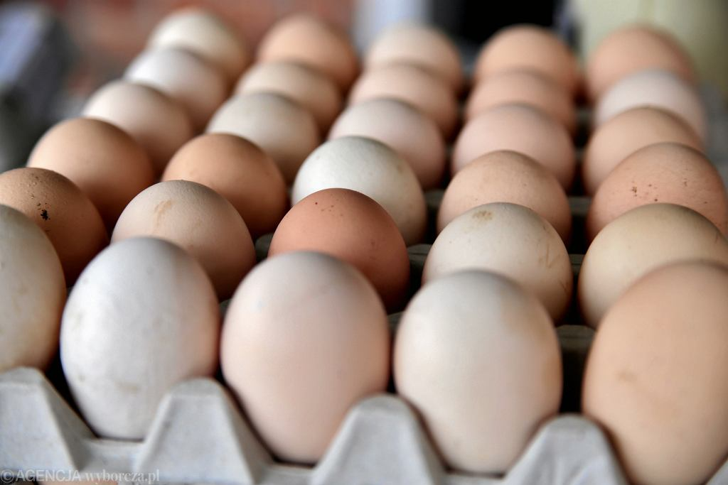 GIS ostrzega przed jajkami z salmonellą