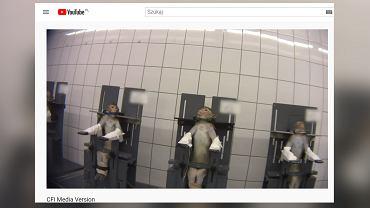 Niemcy. Laboratorium LPT zostanie zamknięte. Zwierzęta leżały tam we własnej krwi i odchodach