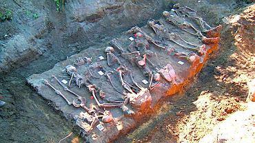 Mogiła 10 żołnierzy niemieckich po szczegółowym oczyszczeniu szkieletów i przygotowaniu do dokumentacji. Gmina Brzeżno