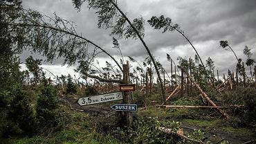 Drzewa powalone przez nawałnice, które przeszły nad Pomorzem. Suszek, powiat Chojnice, Nadleśnictwo Rytel, 12 sierpnia 2017