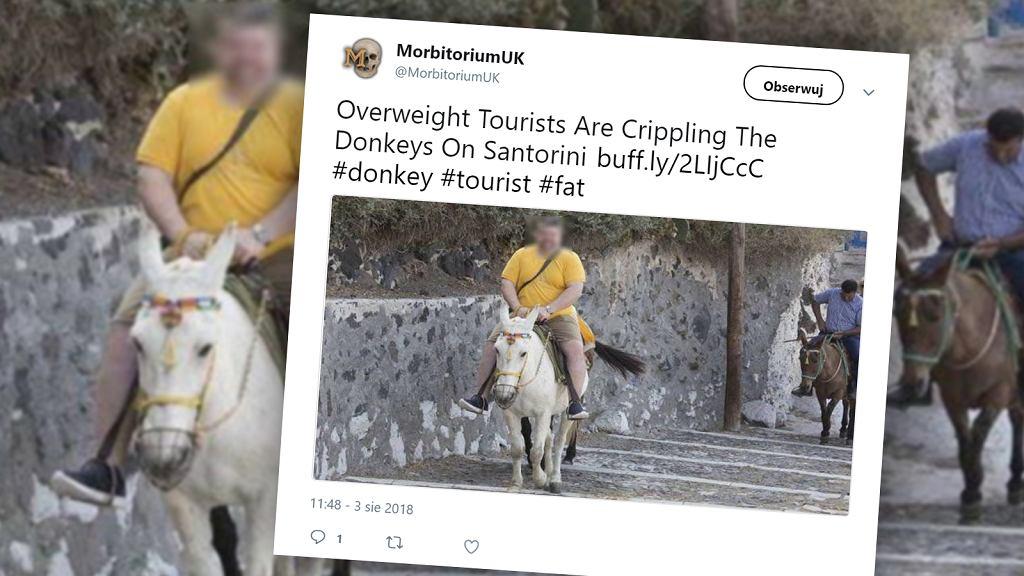 W Grecji wprowadzono zakaz przewożenia przez osiołki turystów, którzy ważą więcej niż 100 kg