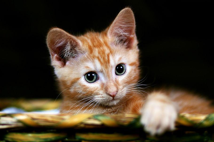Kot - zdjęcie ilustracyjne