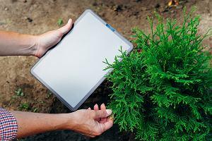 Tuja do ogrodu - rodzaje, zastosowania, przeciwwskazania do sadzenia
