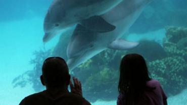 Czy ludzie mogą uczyć się wychowywania dzieci od delfinów?