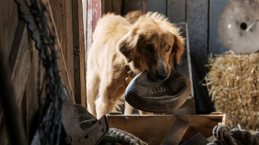 Kadr z filmu 'Był sobie pies'