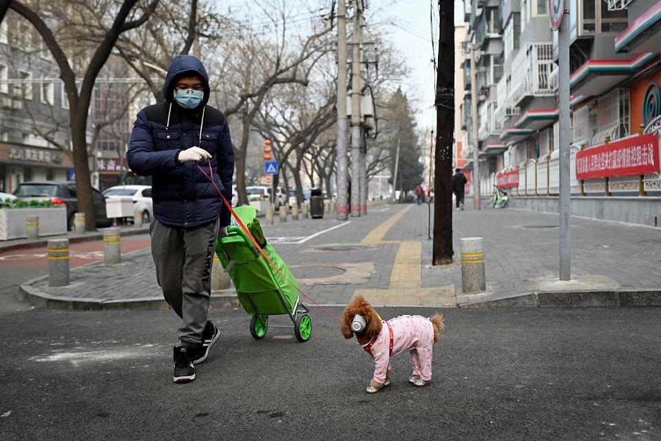 Zakupy i spacer z psem w Pekinie, 13 lutego 2020 r.