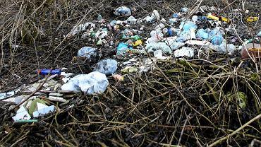 Śmieci w lesie (zdjęcie ilustracyjne)