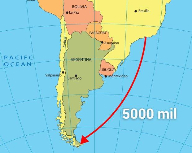 Pingwin pokonuje trasę 2500 mil. W dwie strony to aż 5000 mil!