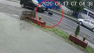 Biertowice. Ruszył z impetem i celowo wjechał w psa. 24-latek został zatrzymany