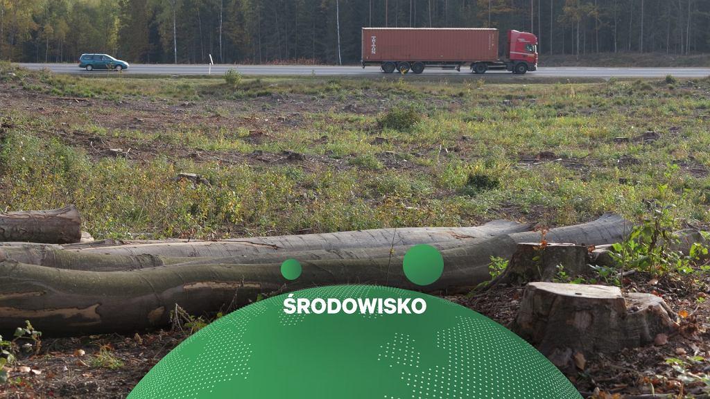 Pod fabrykę polskich samochodów może zostać wycięty las