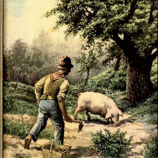 Poszukiwacz trufli (włoska ilustracja zXIX wieku)