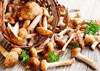 Prawdziwie leśna uczta - sezon na grzyby w kuchni rozpoczęty