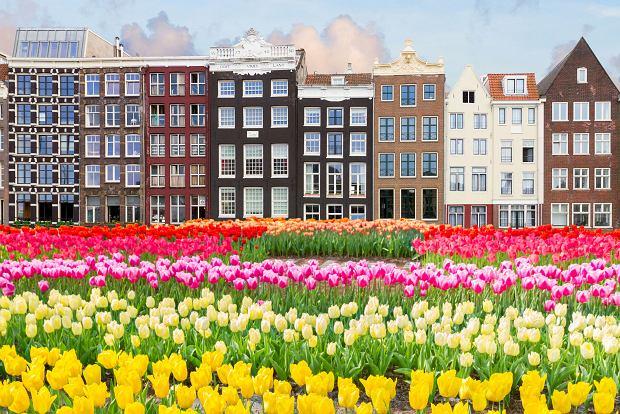 Królestwo Niderlandów nie chce już być Holandią. Ale w Polsce nią pozostanie