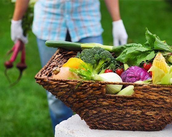 najlepiej autentyczne sekcja specjalna najniższa cena Jakie warzywa i owoce wybierać
