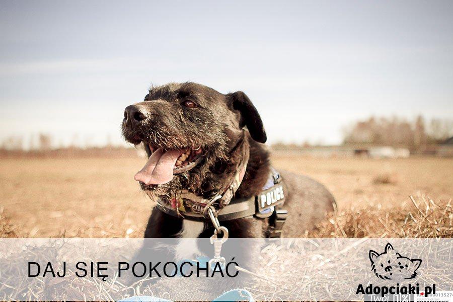 Adopciaki.pl