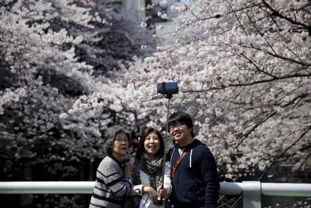 Zdjęcie numer 8 w galerii - Tłumy Japończyków podziwiają kwitnienie wiśni. Oto hanami, zwyczaj celebrowany od stuleci