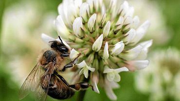 szybkość randki z pszczołą czy randki internetowe się sprawdzą