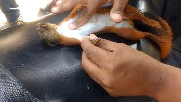 Żyj, wiewiórko, żyj!
