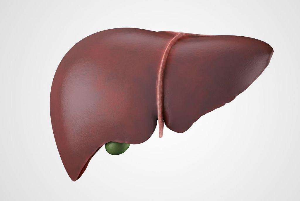 Chociaż wątroba ma niezwykłą zdolność regeneracji, w dojrzałym życiu niełatwo o narząd o tak zdrowym miąższu