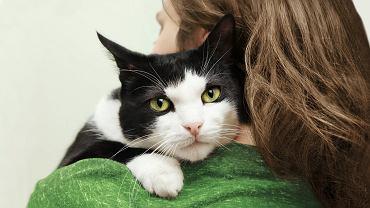 Gruchanie, ocieranie kotów