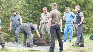 Gdy ekipa weterynarzy dotarła do Jaworzynki, Eryk jeszcze żył. Nie był jednak w stanie samodzielnie się podnieść, miał sparaliżowane łapy