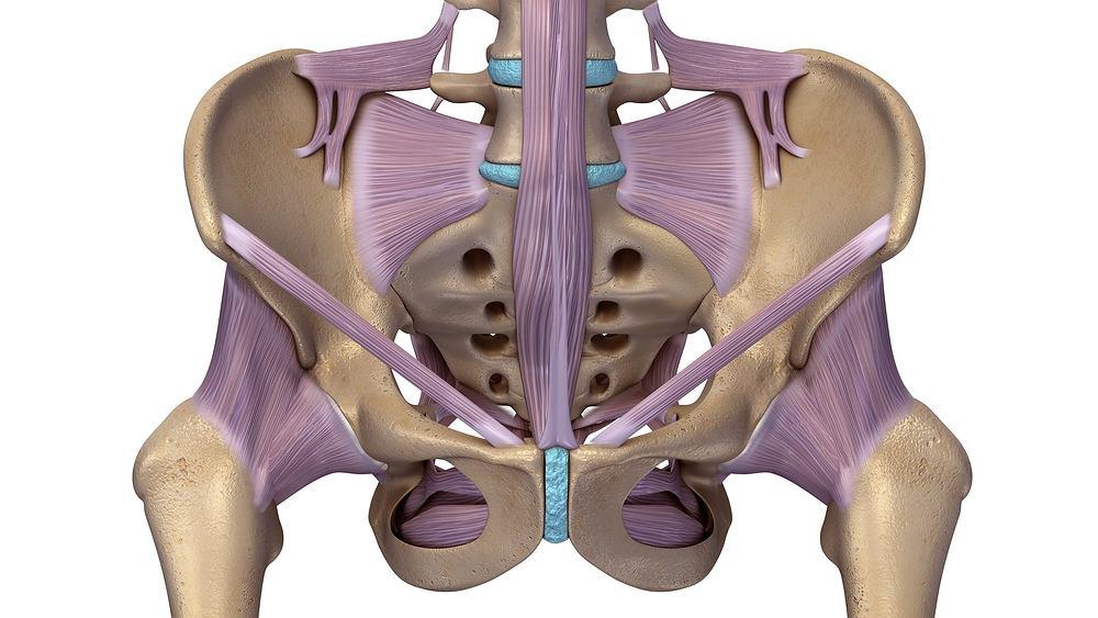 Więzadła to są to pasma tkanki łącznej włóknistej zwartej, które wzmacniają połączenia stawowe, a także ograniczają przestrzenie i otwory między poszczególnymi stawami