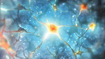 Ruch, komunikacja, decyzyjność, ból, postrzeganie zmysłowe - wszystkie te ludzkie aktywności są możliwe dzięki pracy neuronów