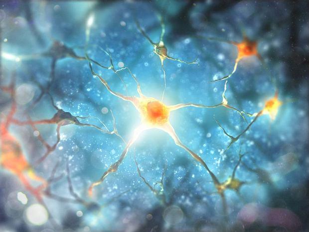 Neuron, czyli komórka nerwowa. Sprawdź, jak działa i po co ci aż tyle różnych neuronów
